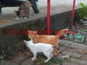 Kucing-kucing liar berkeliaran di Pasar Krapyak Semarang.